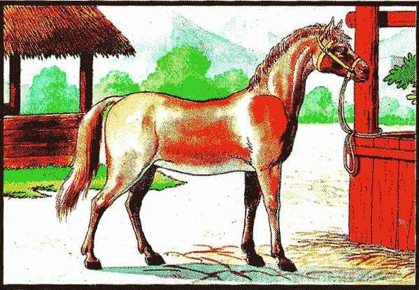 ม้าคนเลี้ยงไว้ใช้ ธาตุไฟสุมตีเหล็ก ท่านว่าถ้าเป็นชาย มีกามารมณ์จัด มักผิดประเวณีลูกเขาเมียท่าน