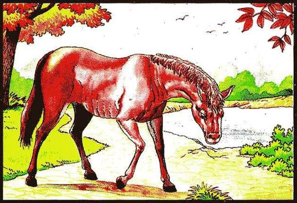 ม้ากระจอก ธาตุไฟในดิน ท่านว่าผู้นั้นมักเหนื่อยทั้งกายและใจ หาที่พักพิงช่วยเหลือคนไม่ได้