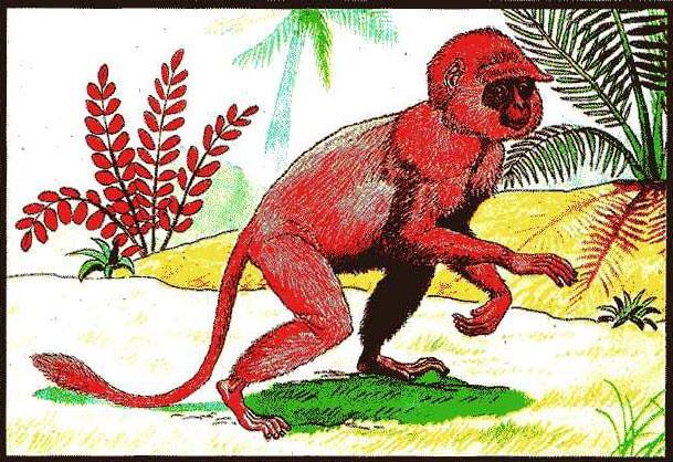ลิงพระโพธิสัตว์ ธาตุเหล็กหลอม ท่านว่า มักเป็นคนใจอ่อน โยนซื่อสัตย์สุจริต จงรักภักดีต่อผู้บังคับบัญช