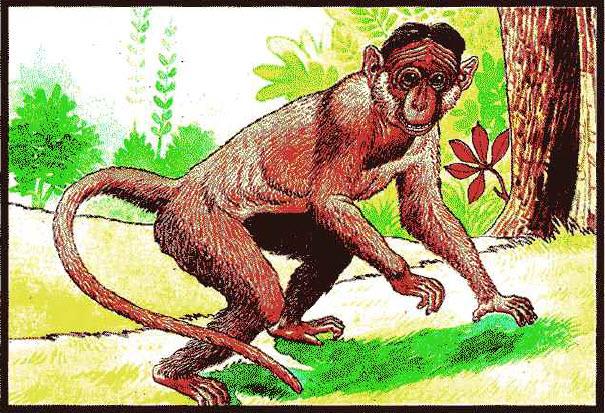 ลิงทโมน ธาตุเหล็กน้ำพี้เนื้อดี ท่านว่า มักมีใจเด็ดเดี่ยวกล้าหาญ สมเป็นชายชาญ